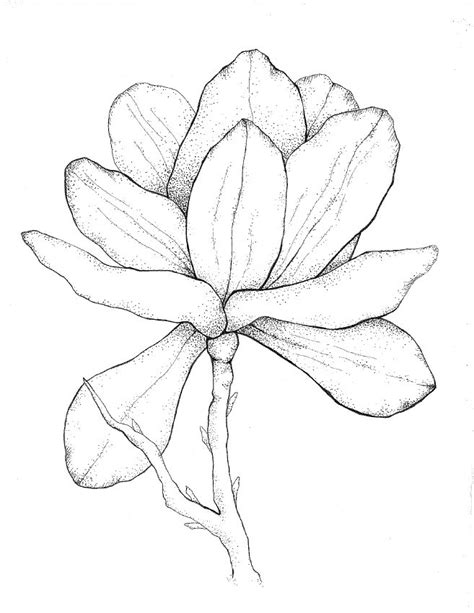 printable magnolia flowers 369 best images about art pencil and drawing on