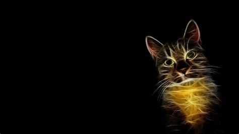 wallpaper 4k cat 4k cat wallpapers high quality download free