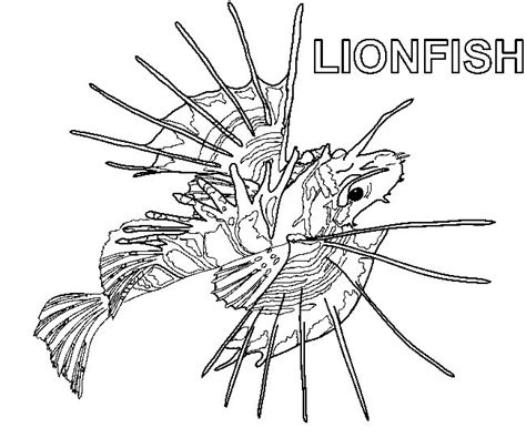 Coloring Pages For Kids Lionfish Coloring Page Art For Lionfish Coloring Page