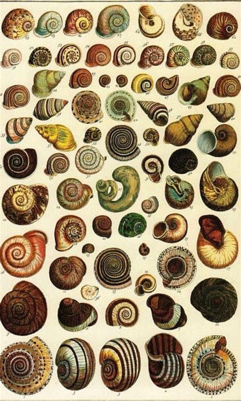 seba cabinet of natural 3836554372 25 best ideas about nature illustration on flower illustration pattern flower