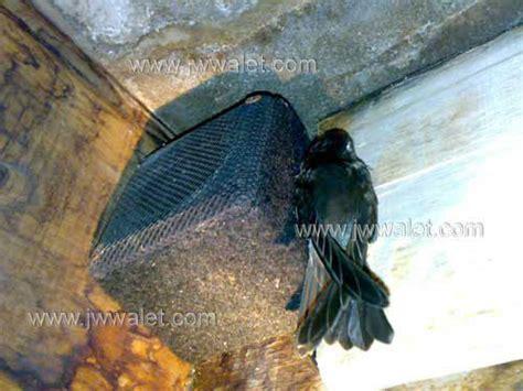 Cat Khusus Lubang Masuk Burung Walet berita jw walet sarana bisnis budidaya walet alat