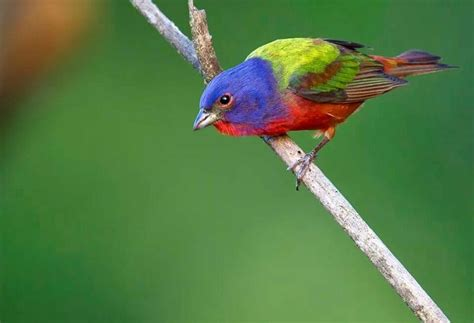26 best images about birds found in arkansas on pinterest