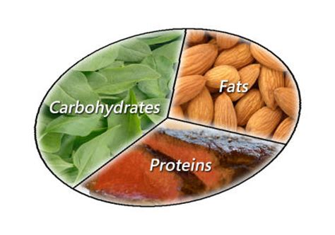 3 ways carbohydrates are used hcs 208 project carbs proteins and fats but