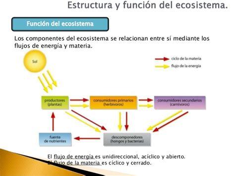 estructura y funcin del 8491130810 4eso ecologia estructura y funci 243 n del ecosistema