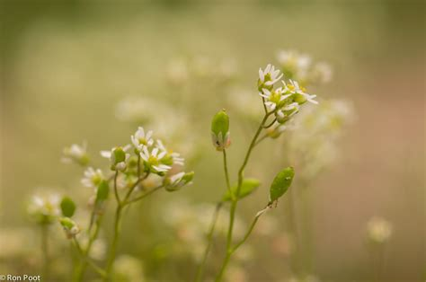 achtergrond bloemen rustig vroegeling natuurfotografie