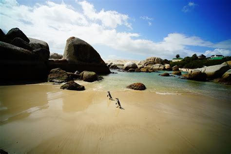 dontplayahate: Cape Town - Penguin Colony at Boulders Beach