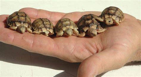 lada per tartarughe di terra tartarughe