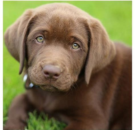 puppy eye color puppies with green search 齦窶 盒 窶 齡