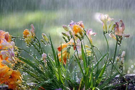 characteristics of freesia flower typesofflower com typesofflower com