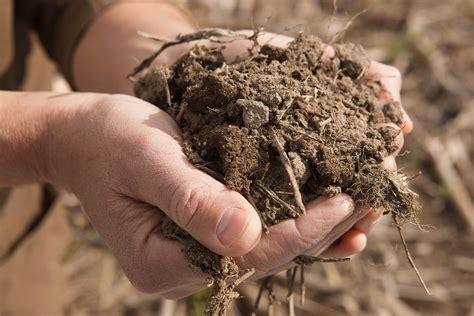 backyard soil how to test your garden soil stoney creek farm