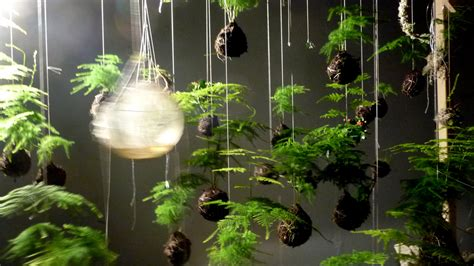 Japanese String - japanese string gardens suspend plants above ground colossal
