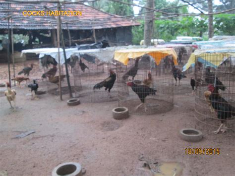 backyard poultry farming godavari backyard poultry farm agricultureinformation com