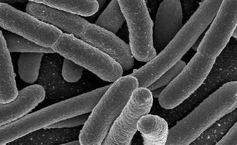 e coli monitoring columbia riverkeeper e coli monitoring