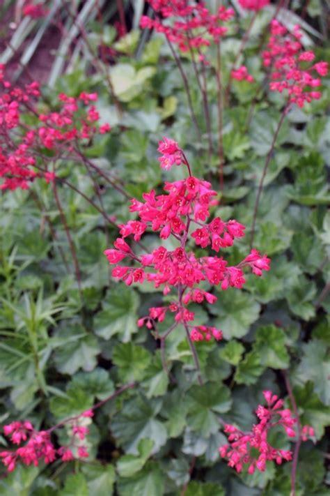 Gartenbepflanzung Ideen by Gartenbepflanzung Mit Widerstandsf 228 Higen Pflanzen