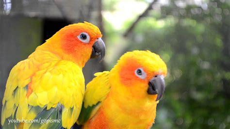 birds hd youtube