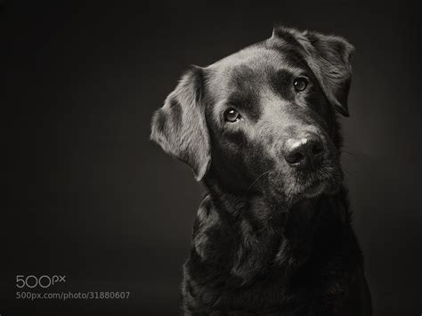 pet and photography for everybody secrets from a pro books 500px iso 187 beautiful photography stories the