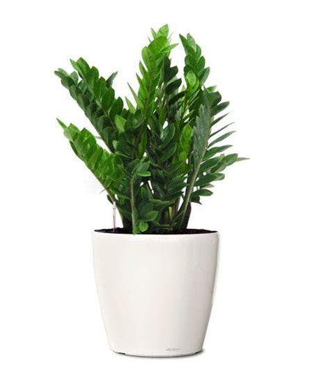 air purifying plants palmers garden centre