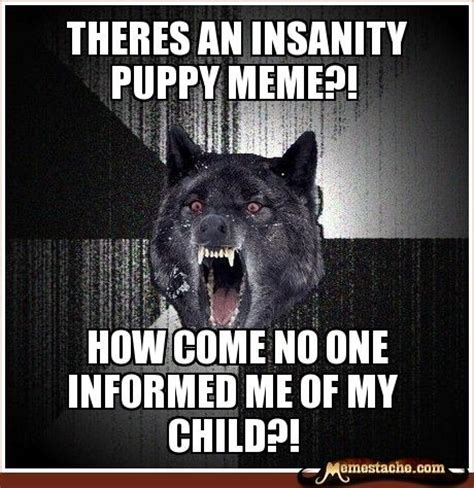 Insane Wolf Meme - the 25 best ideas about insanity wolf on pinterest