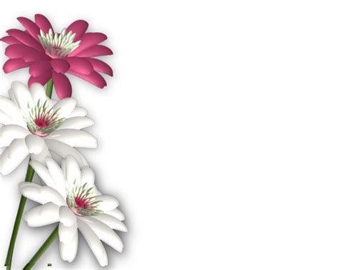 flower wallpaper effect flowers png photoshop png frames wallpapers designs