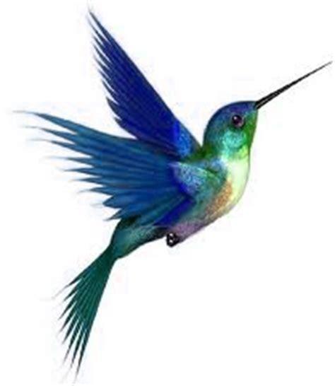 web page design by kolibri in belize