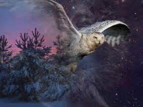 fonds d 233 cran animaux gt fonds d 233 cran oiseaux hiboux et chouettes au clair de lune par tonio