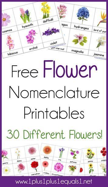 montessori printables uk flower nomenclature montessori printables i am flower