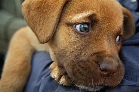 sad puppy love animals cute dog love puppy image 203554 on favim com