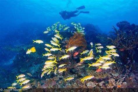 underwater dive drift diving underwater photography