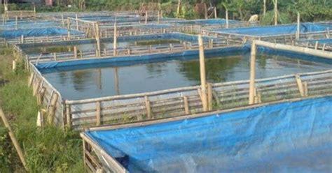 Pakan Ikan Lele Agar Cepat Besar cara membuat pakan ikan lele agar cepat besar soc