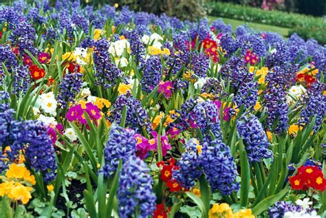 spring flower garden flower garden pictures pictures of beautiful flower gardens