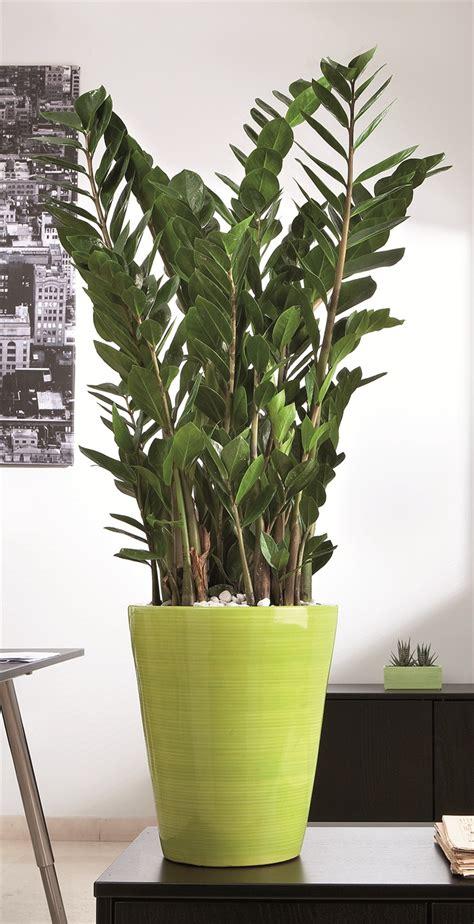piante di interno arreda con il verde florpagano di antonio pagano piante e
