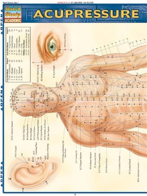 Pdf Trigger Points Quickstudy Inc Barcharts by Acupressure Study Academic Outline Buy In