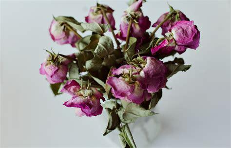 fiori secchi roma mazzi di fiori secchi per romani cattivoni dimensione