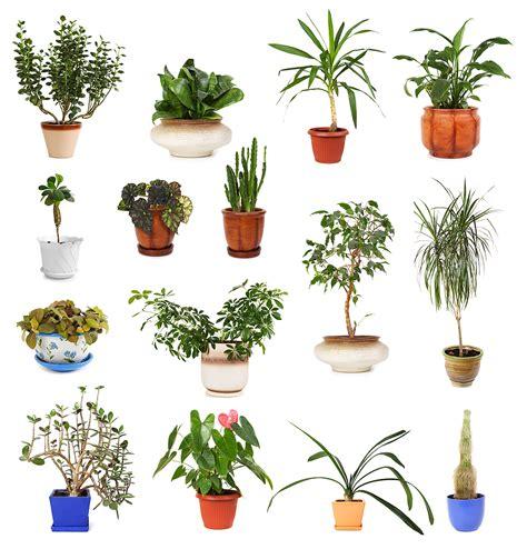 plants floral sunshine nw portland or 97210