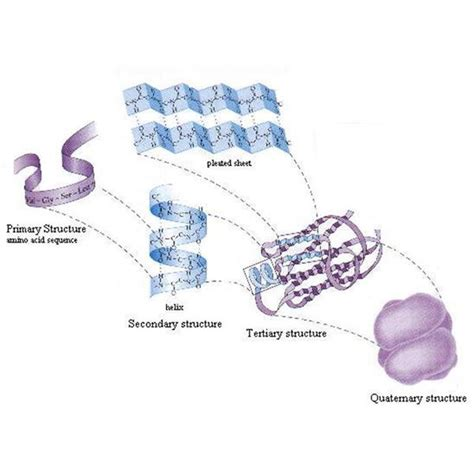 7 protein functions an introduction to the of protein molecules in the