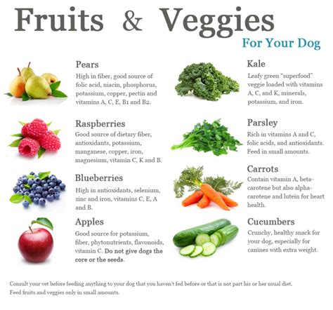 dogs and oranges fruit and vegetable diet for dogs hugo