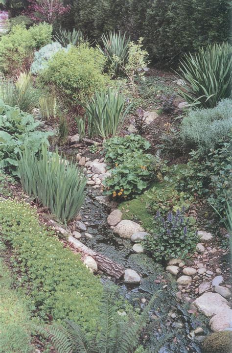 friendly backyard ground cover 100 friendly backyard ground cover how to plant
