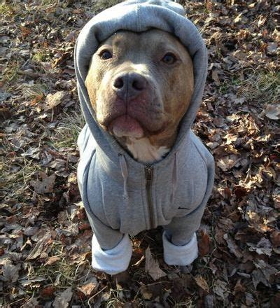 Sweater Pit Bull Imbong sweater dress the clothes for your pets