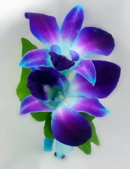 blue orchid tattoo 17 best ideas about blue orchid on