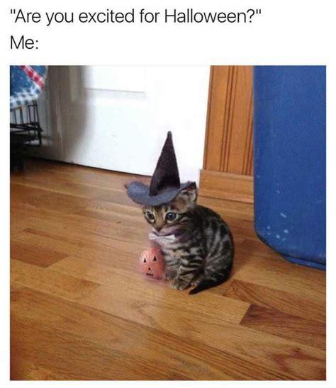Halloween Cat Memes