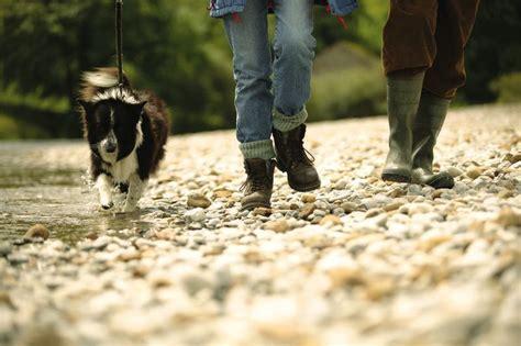 casas rurales en cantabria que admiten perros casas rurales en picos de europa que admiten perros