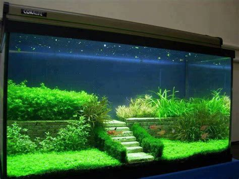 Tank Aquascape by Great Aquascaping Fish Tanks Terrariums