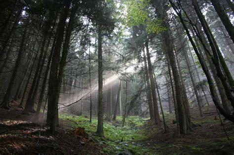sognare pioggia in casa sognare bosco interpretazione numeri sognipedia it