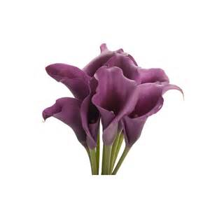 purple mini calla lilies calla lilies types of flowers flower muse