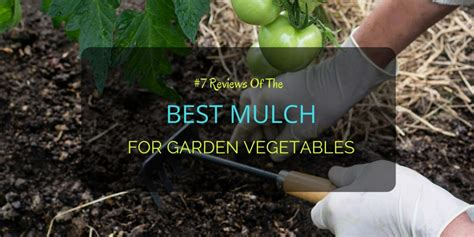 what is the best mulch for a vegetable garden 7 reviews of the best mulch for garden vegetables