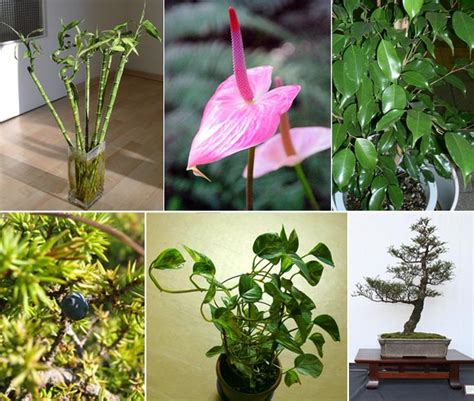 type of plants for garden in pics now plants for your personality types rediff