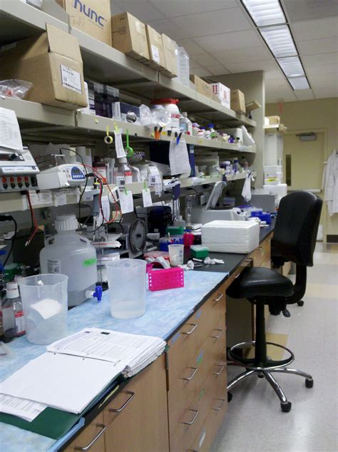 lab bench transformation lab bench transformation 28 images laboratory bench