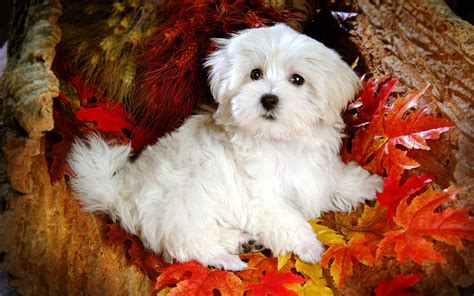 puppies pictures of puppies hd pictures free page 261