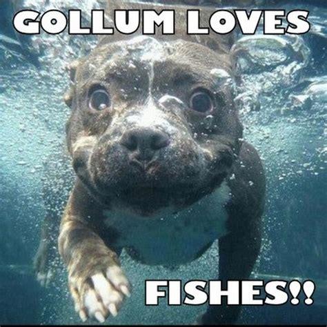 Gollum Memes - gollum memes 06