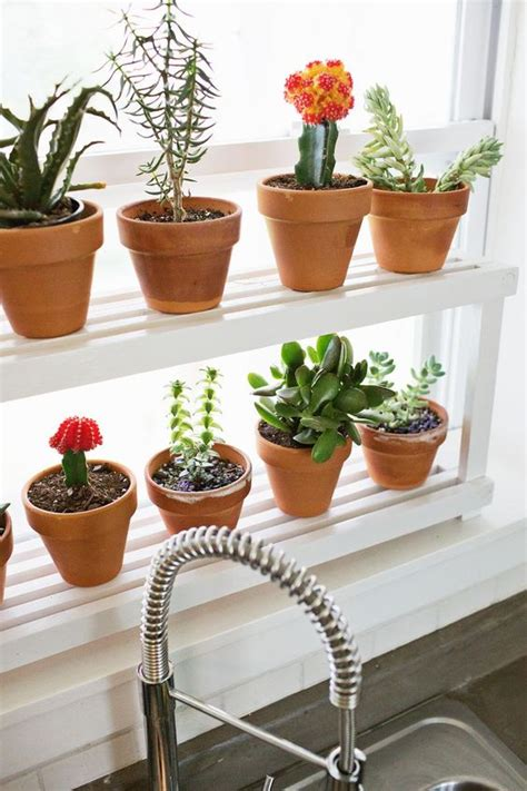 Window Sill Herbs Designs Window Ledge Plant Shelf Gardens Power Tools And Herbs Garden